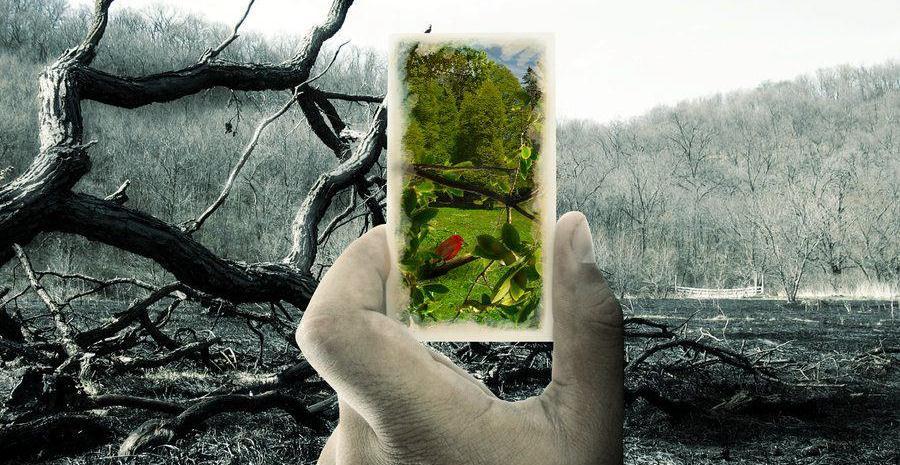 سرمایہ داری کی ماحولیاتی تباہ کاری